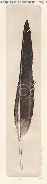 Eagle Feather -- (c) Laurie Ferguson Craig