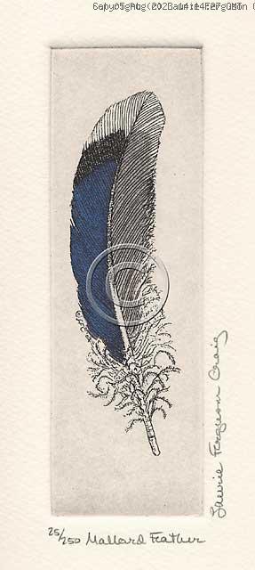 Mallard Feather -- (c) Laurie Ferguson Craig