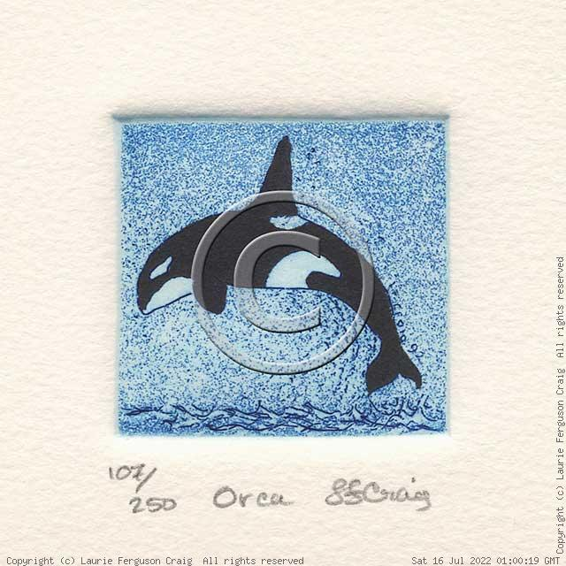 Orca -- (c) Laurie Ferguson Craig