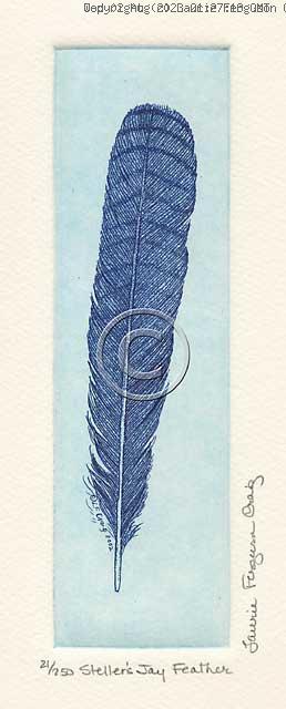 Steller's Jay Feather -- (c) Laurie Ferguson Craig